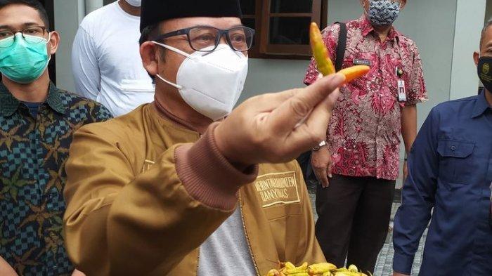 Ini Jelas Bukan Pewarna Makanan Cabai Rawit Kuning Dicat Merah Dijual di Pasar Tradisional